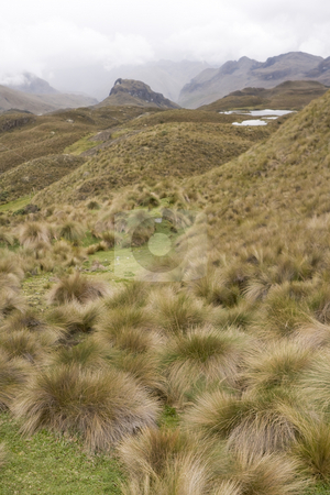 Highlands of Ecuador 4163m stock photo, Highlands of Ecuador 4163m by Sharron Schiefelbein
