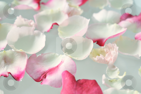 Rose petals stock photo, Rose petals in water. spa moments by Carmen Steiner