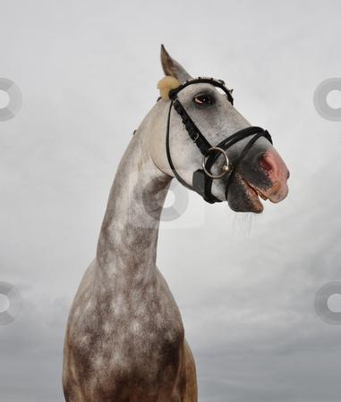 Crazy horse stock photo, Crazy horse by Robert Biedermann