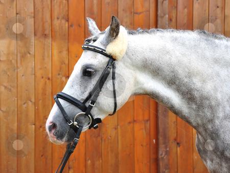 Horse stock photo, Horse by Robert Biedermann