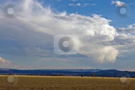 High Mountain Meadow stock photo, Yellow field of dry grass with blue mountains and clouds in the distance. by Andrew Orlemann