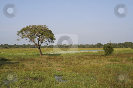View of wasgomuwa national park stock photo, A view of wasgomuwa national park sri lanka by Mike Smith