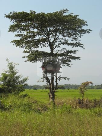 Treehouse in sri lanka stock photo, A treehouse in wasgomuwa national park sri lanka by Mike Smith