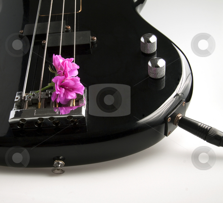Bass and flower stock photo, Closeup of a part of a bass guitar with a flower in between the strings by Fabio Alcini