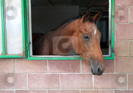 Horse stock photo, Portrait of a brown horse in a box by Fabio Alcini