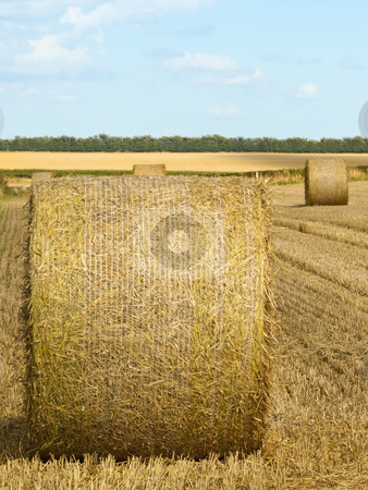 Round bales in summer stock photo, A field with round bales at harvest time in summer by Mike Smith