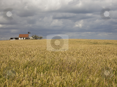Pirates hideaway stock photo, A pirates hideaway with wheatfield under a dramatic sky by Mike Smith