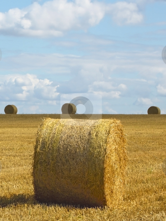 Four round bales in a field stock photo, Four round bales in a freshly cut field of wheat in summer by Mike Smith