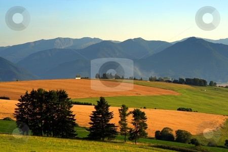 Fields, meadows stock photo, Fields and meadows in evening light with mountains in background and evergreen trees in foreground by Juraj Kovacik