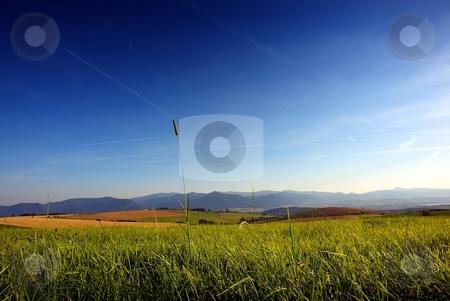 Tidy detail of grass on meadow stock photo, Detail of grass on a meadow with mountains in background and big blue sky by Juraj Kovacik