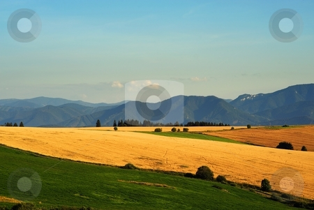 Yellow fields and green meadows stock photo, Yellow fields and green meadows with mountains in background by Juraj Kovacik