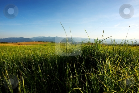 Detail of chaotic grass on meadow stock photo, Detail of grass on a meadow in evening summer light with field and mountains in background by Juraj Kovacik