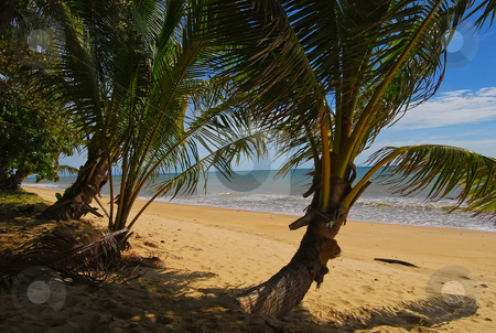 Palm Beach stock photo, Looking through the plam trees to the beach on a sunny day by Emma White