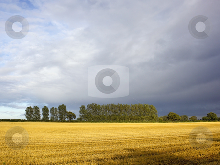 Stormy skies stock photo, A stormy sky over stubble fields and poplar trees by Mike Smith