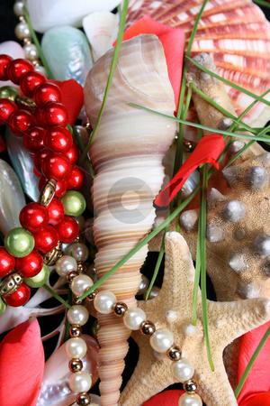 Seashells and jewelery stock photo, Variety of seashells and jewelery between petals by Vanessa Van Rensburg