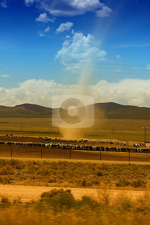 Rural Scene with Cows stock photo, Rural Scene of Cows under the blue skies by Mehmet Dilsiz