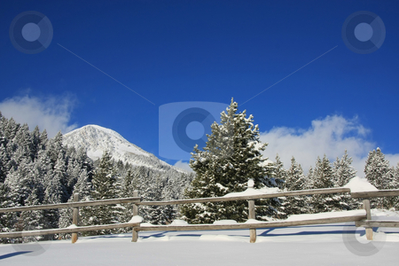 Winter Skys stock photo, View of pine trees right after a snow storm With a wood fence in the foreground with deep blue sky's by Mark Smith