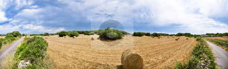 Harvest fields stock photo, Harvest fields near Ciutadela, Minorca, Spain. by Anibal Trejo