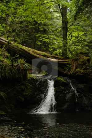 Moran State Park stock photo, USA, Washington, Orcas Island, Moran State Park by David Ryan