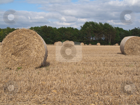 Autumn Harvest stock photo, A field of wheat freshly harvested by Stephen Clarke