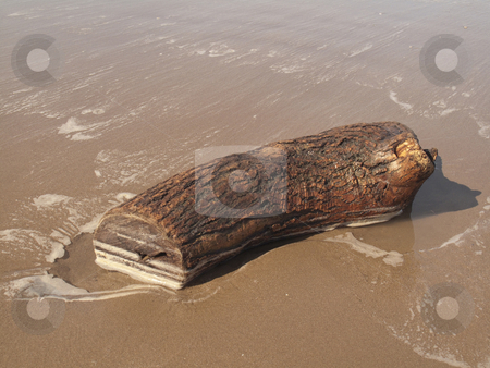 Drift Wood on Beach stock photo, A piece of drift wood on Weston Super Mare beach by Stephen Clarke