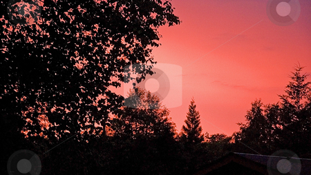 Brilliant Sunset Trees Silhouette stock photo, This brilliant sunset sky is many tones of pink against a silhouette tree horizon. by Valerie Garner