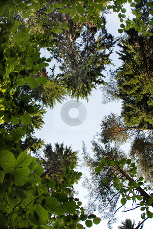 Tree crown frame stock photo, Frame of green trees crowns and branches in forest by Julija Sapic