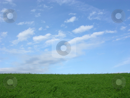 Clover field and blue sky with clouds stock photo, Clover field and blue sky with clouds by Robert Biedermann