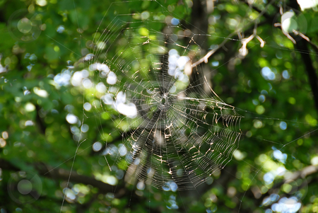 Spider web stock photo, Spider web over blur green natural background by Julija Sapic