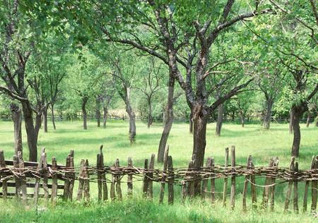 Old pruneyard stock photo, An old pruneyard in western Serbia. by Ivan Paunovic