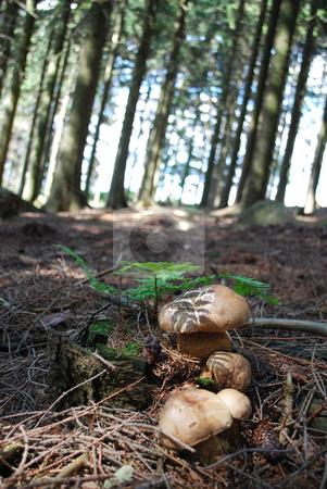 Mushrooms stock photo, mushrooms by Sarka