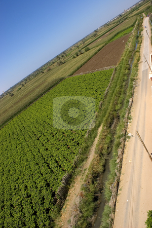 Vine Road stock photo, Vines agriculture on harvest time in El-Minya, Egypt. by Amr Hassanein