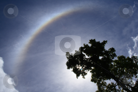 Halo_008 stock photo, Backlit tree and halo, a meteorological phenomenon, in a cloudy sky. Sun is shining through branches. by Steeve Dubois