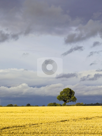 Stormy skies 3 stock photo, Stormy skies over a rural landscape by Mike Smith