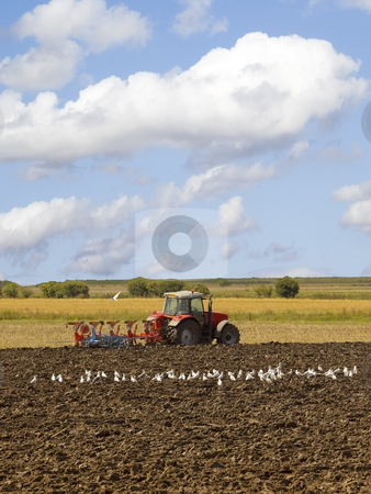 Tractor plowing stock photo, A red tractor plowing a field with seagulls in summer by Mike Smith
