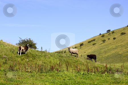 Summer hillsides stock photo, Sheep amongst the hills under a summer sky by Mike Smith
