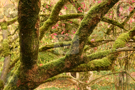 Moss-covered tree branches and fall foliage stock photo, Moss-covered tree branches and fall foliage in an arboretum in the Netherlands by Stephen Goodwin