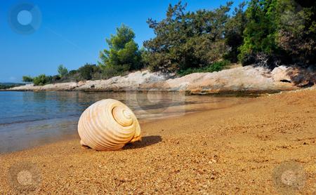 Seashell on a sandy beach in the Mediterranean stock photo, A seashell lying on a sandy beach in the Mediterranean, under a clear blue sky by Andreas Karelias