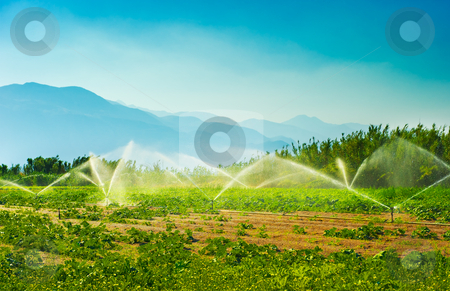 Irrigation stock photo, Irrigation sprinklers in a vegetable producing farm during a hot summer morning by Andreas Karelias