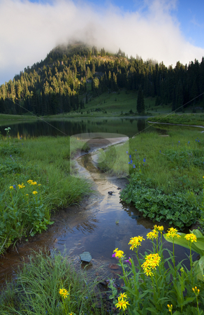 Wildflower Stream stock photo, Yakima Peak partially shrouded in fog as a small stream trickles past wildflowers into Lake Tipsoo. by Mike Dawson