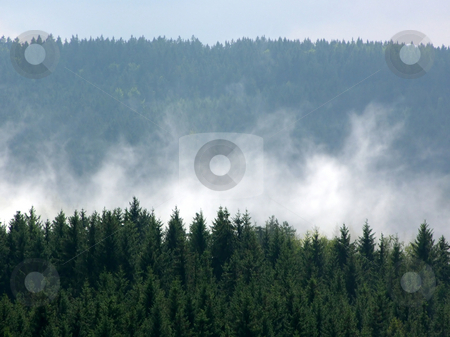 Fog and forest stock photo, Bavarian forest minutes after a heavy rainfall by Robert Biedermann