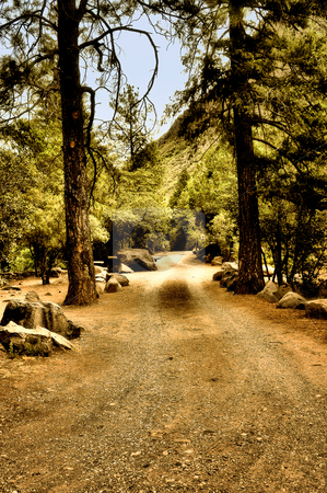 Country dirt road stock photo, Scenic view of a country dirt road by Monica Boorboor