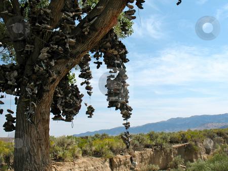 Shoe Tree2 stock photo, Churchill County, Nevada US 50 near Middlegate by John Dickinson