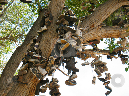 Shoe Tree3 stock photo, Churchill County, Nevada US 50 near Middlegate by John Dickinson