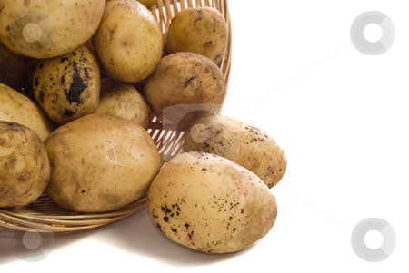 Potatoes stock photo, A pile of garden potatoes shot on a white background by Richard Nelson