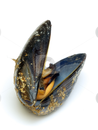 Mussel stock photo, Just a open mussel on a white background. by Sinisa Botas
