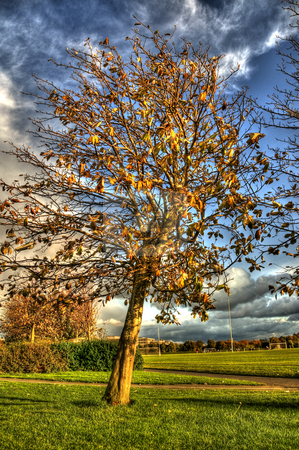 Beautiful Tree Blowing against the wind stock photo, A nature image of a single tree being blown in the wind. by Stephen Kiernan