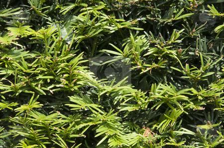 Pin Leaves stock photo, A pattern of long green leaves by Stephen Kiernan