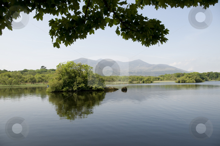 Overhanging Leaves stock photo, A picturesque view of a tree in a lake in Co. Kerry, Ireland by Stephen Kiernan
