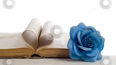 Love My Bible stock photo, Concept of a loveable religion with a bible and it's pages making a heart shape along with a fake flower on the side, shot on white by Richard Nelson